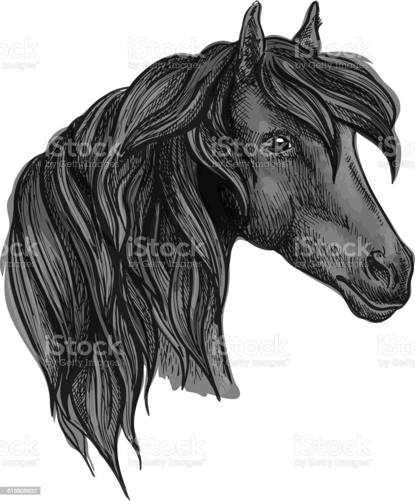 Arabian horse head sketch for equine sport design vector art illustration