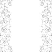 Arabian jasmine Outline Border on White Background