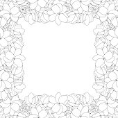 Arabian jasmine Outline Border on White Background2