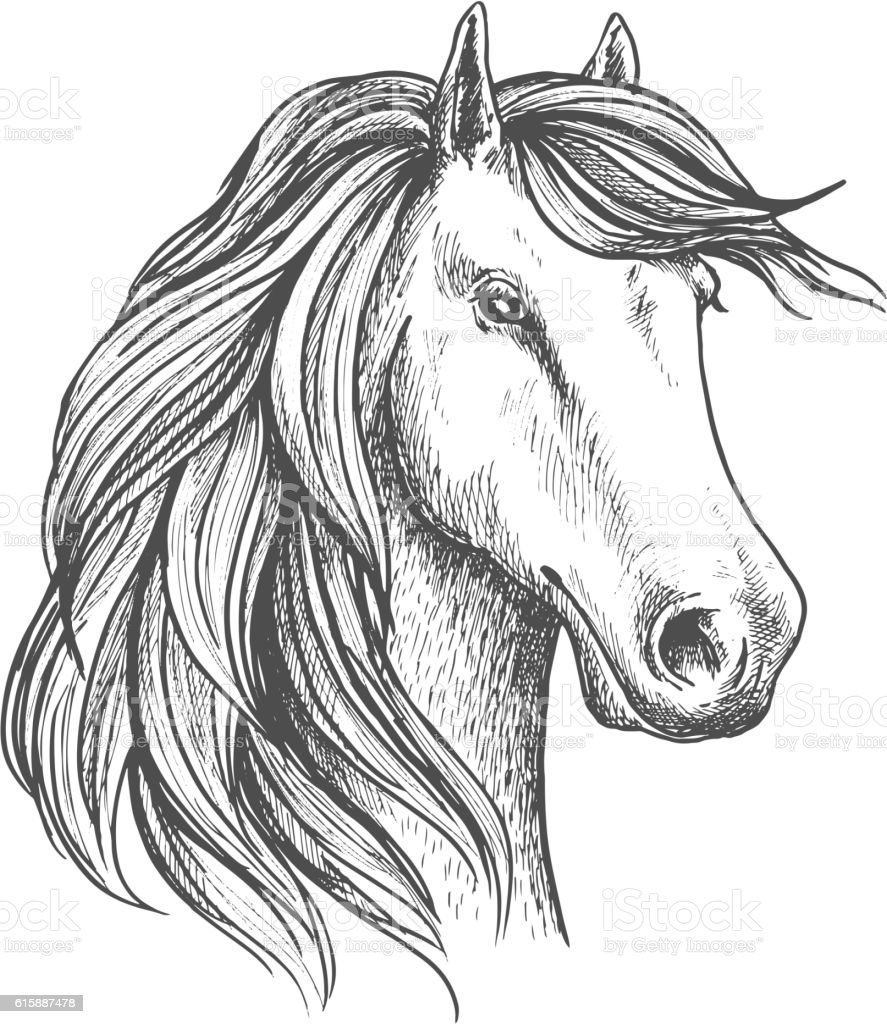 Arabian mare horse head isolated sketch vector art illustration