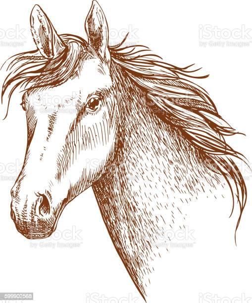 Arabian stallion horse head sketch vector id599902568?b=1&k=6&m=599902568&s=612x612&h=b0ylc79o lq3jtuxiu5v6dzmnlwg 2re6cspu1vdmjm=