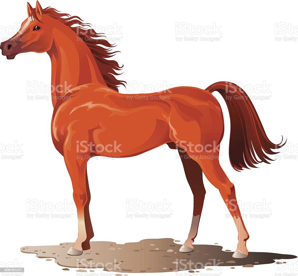 Arabian Stallion vector art illustration