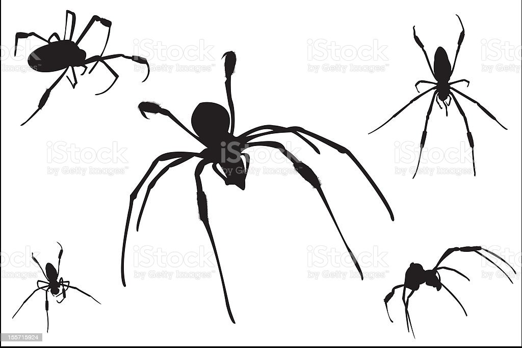 Arachnids Silhouettes royalty-free arachnids silhouettes stock vector art & more images of arachnid
