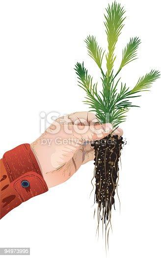 istock Arbor Day Evergreen Tree. 94973995