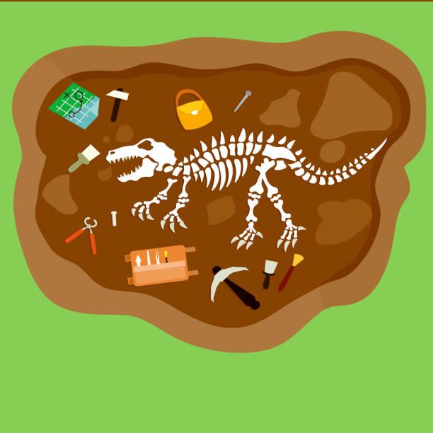 archeology. - animal bone stock illustrations