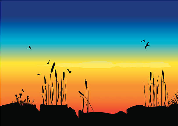Archipelago - Vector A sunset in the archipelago. Some reed and some fuzzy flowers in the foreground, and some birds flying in the background. Vector for AI8. lakeshore stock illustrations