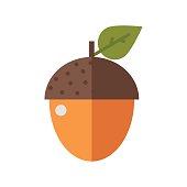 Flat design oak arcon nut vector illustration.