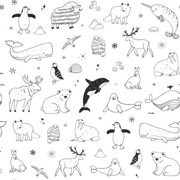 Arctic and antarctic polar doodle cartoon animals seamless pattern Arctic and antarctic polar doodle cartoon animals illustrations hand drawn seamless pattern killer whale stock illustrations