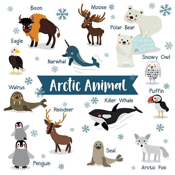 Arctic Animal on white background with animal name vector illustration. Arctic Animal cartoon on white background with animal name. Penguin, Polar Bear, Reindeer. Walrus. Moose. Snowy Owl. Arctic Fox. Eagle. Killer whale. Bison. Seal. Puffin. Narwhal.  Vector illustration. arctic stock illustrations