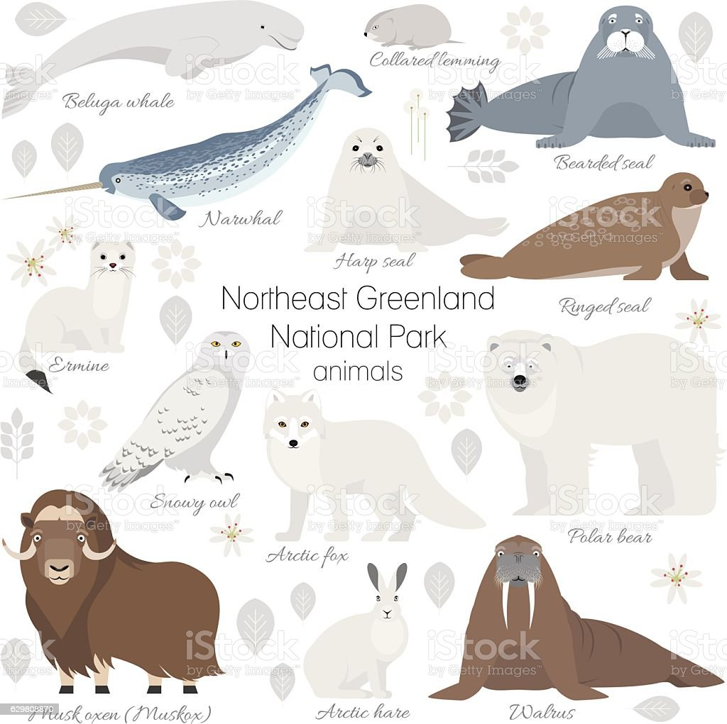 Arctic animal set. Polar bear, narwhal, musk ox, seal, walrus vector art illustration