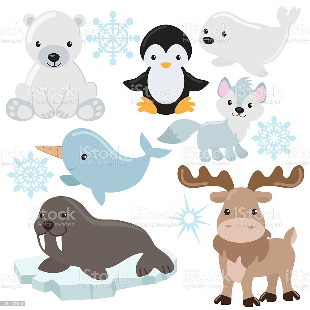 Arctic animal vector illustration vector art illustration