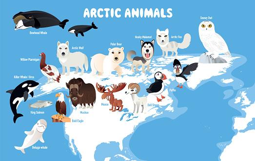 Arctic Animals and North America