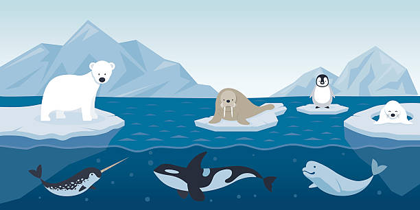 arctic animals character and background - antarctica travel stock illustrations