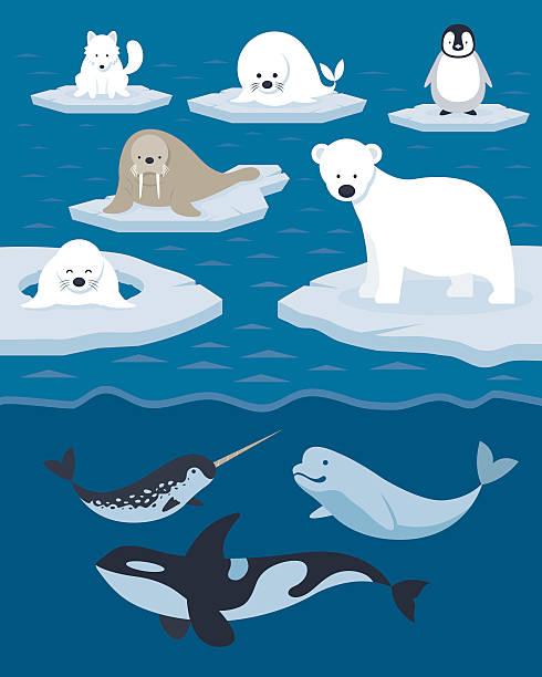 Arctic Tiere Zeichen und Hintergründe – Vektorgrafik