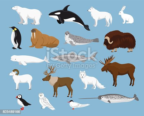 istock Arctic animals collection 825489166