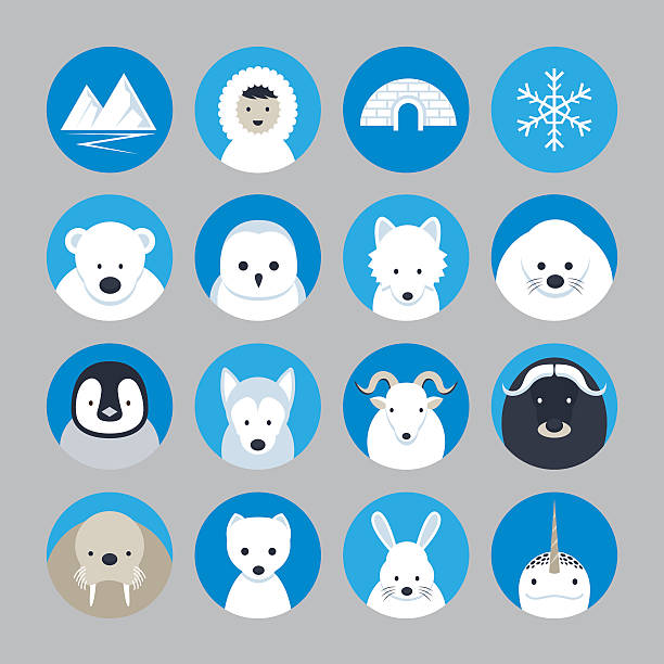Arctic Animals Flat Icons Set Winter, Nature Travel and Wildlife ermine stock illustrations