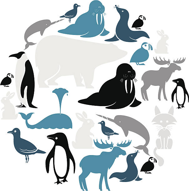 Arctic Animals Icon Set See below for the other continents. Click below for more animal images. arctic stock illustrations