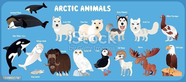 Vector Arctic Animals