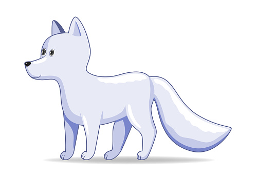 Arctic fox animal standing on a white background.