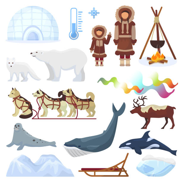 arctic vector northern borealis norway and husky dog sledding sledge to yurta in snowy winter illustration polaris set of north ethnic characters animals and polar bear isolated on white background - antarctica travel stock illustrations