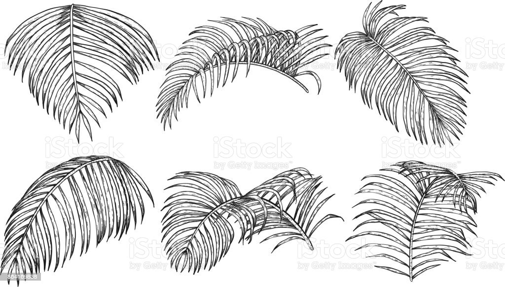 Areca palm sketch by hand drawing. royalty-free areca palm sketch by hand drawing stock vector art & more images of areca palm tree