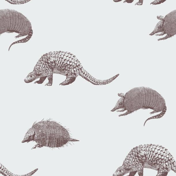 gürteltier nahtlose muster - ameisenbär stock-grafiken, -clipart, -cartoons und -symbole
