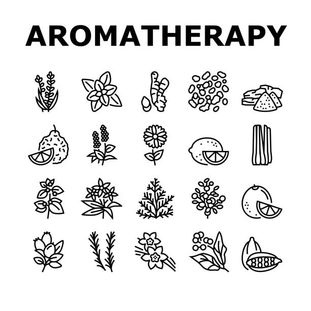 illustrations, cliparts, dessins animés et icônes de aromatherapy herbs collection icons set vector illustration - pinacée