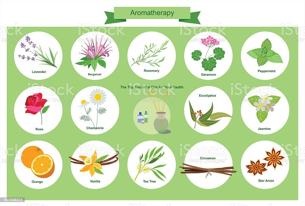 Aromatherapy vector art illustration