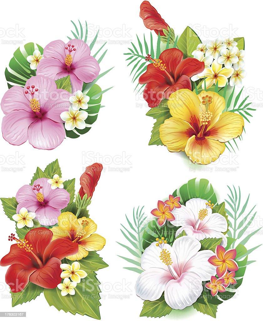 Arrangement from hibiscus flowers vector art illustration
