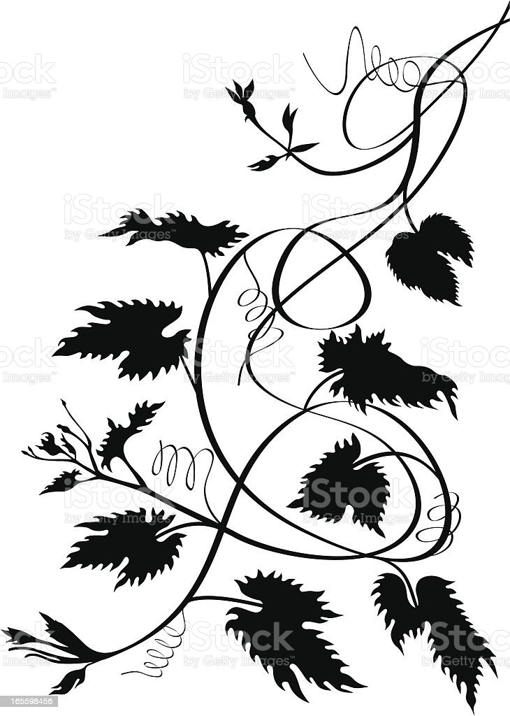 Art grape vines royalty-free art grape vines stock vector art & more images of black and white