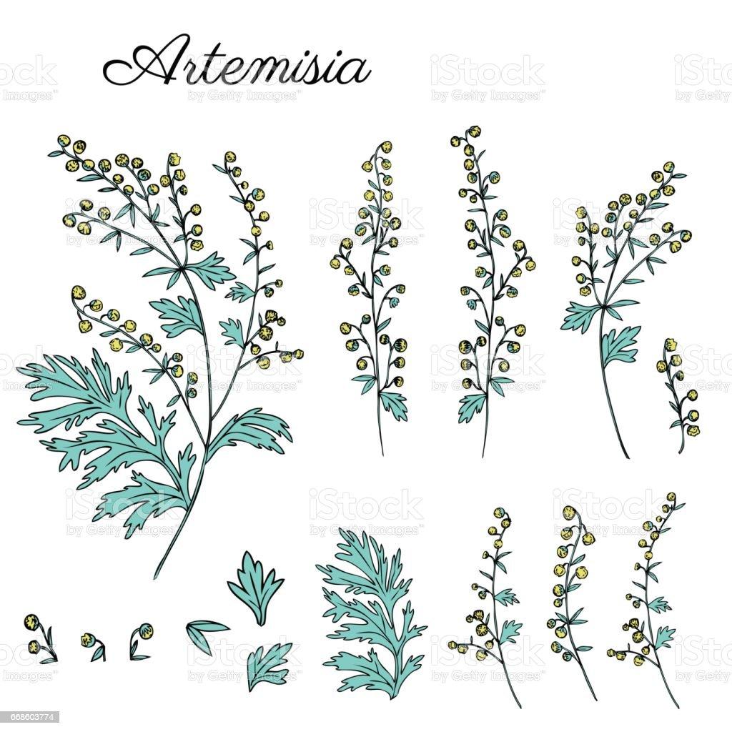 Artemisia Absinthium Common Wormwood Absinthium Absinthe
