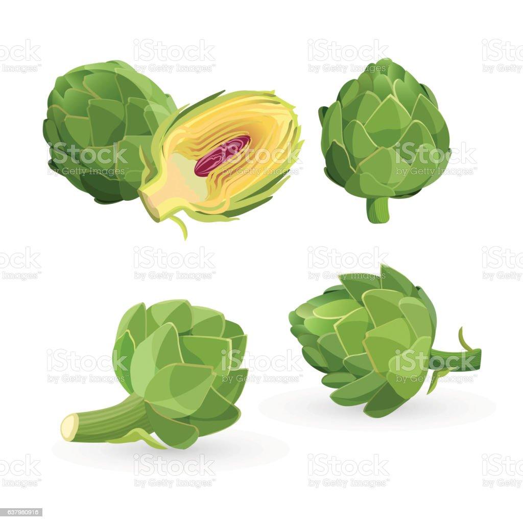 Artichoke green flower heads isolated. Vector illustration of edible vegetable vector art illustration