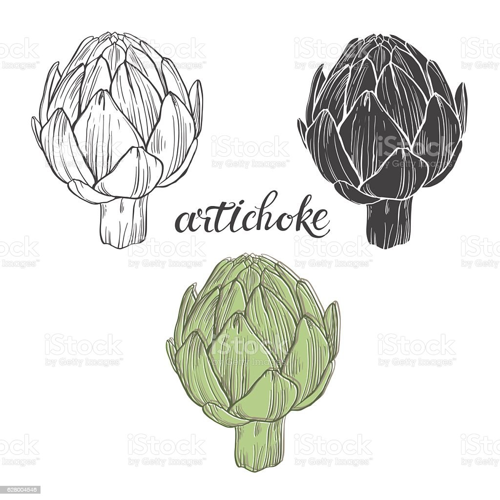 Artichoke.  Isolated vector hand-drawn elements for your design. - Illustration vectorielle