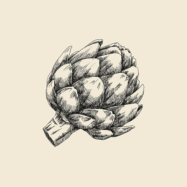 Artichoke Sketch Hand drawn illustration. artichoke stock illustrations
