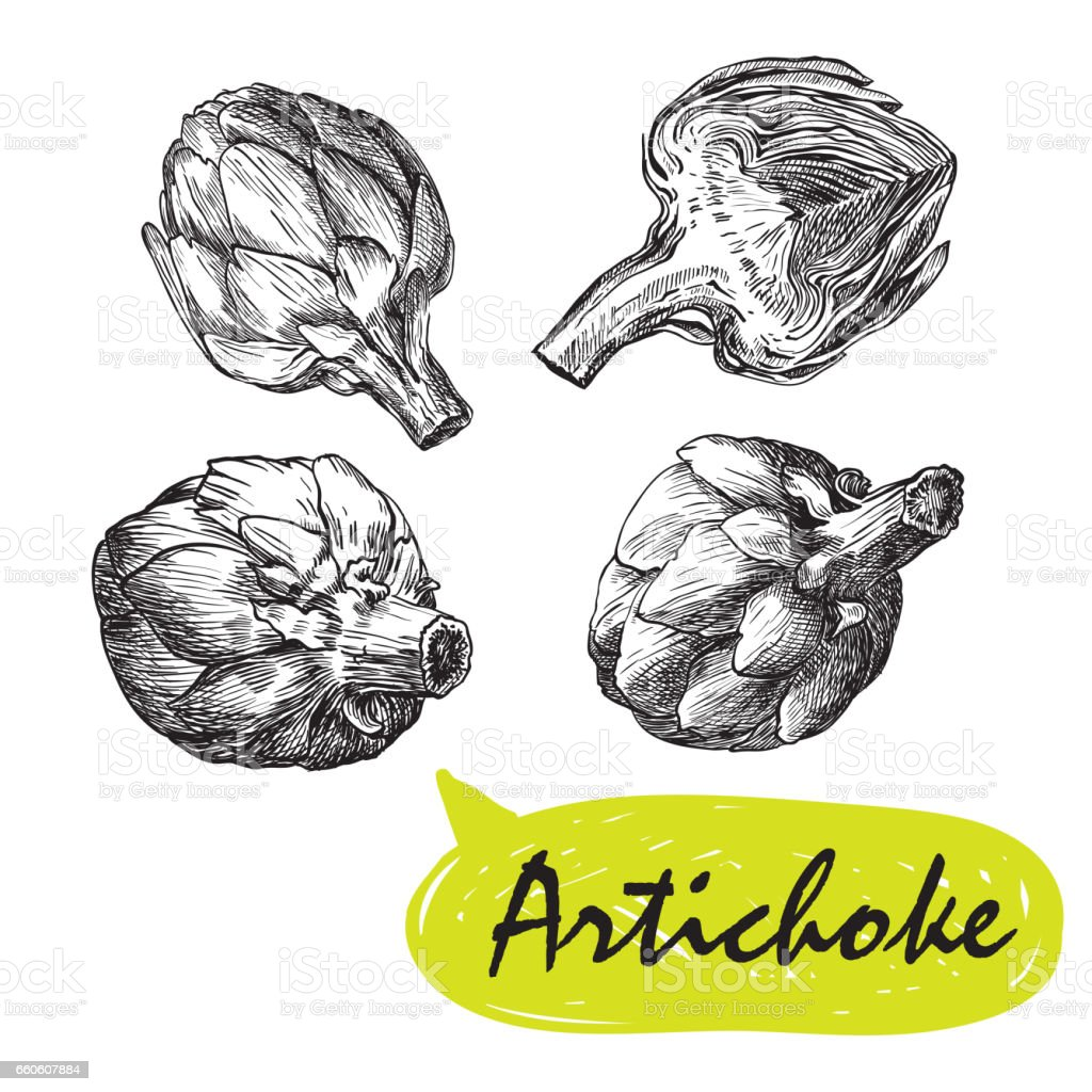 artichoke sketches. harvesting royalty-free artichoke sketches harvesting stock vector art & more images of agriculture