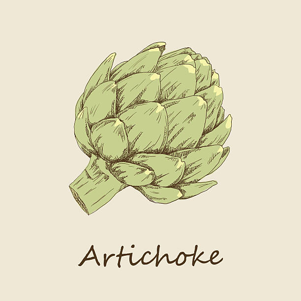 Artichoke Hand drawn artichoke. artichoke stock illustrations