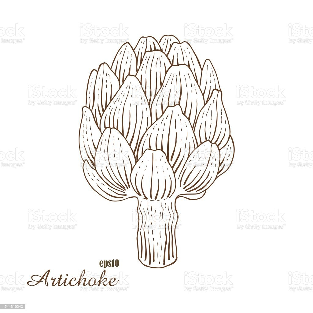 Artichoke. Vector illustration in woodcut style. Hand-draw sketch. vector art illustration