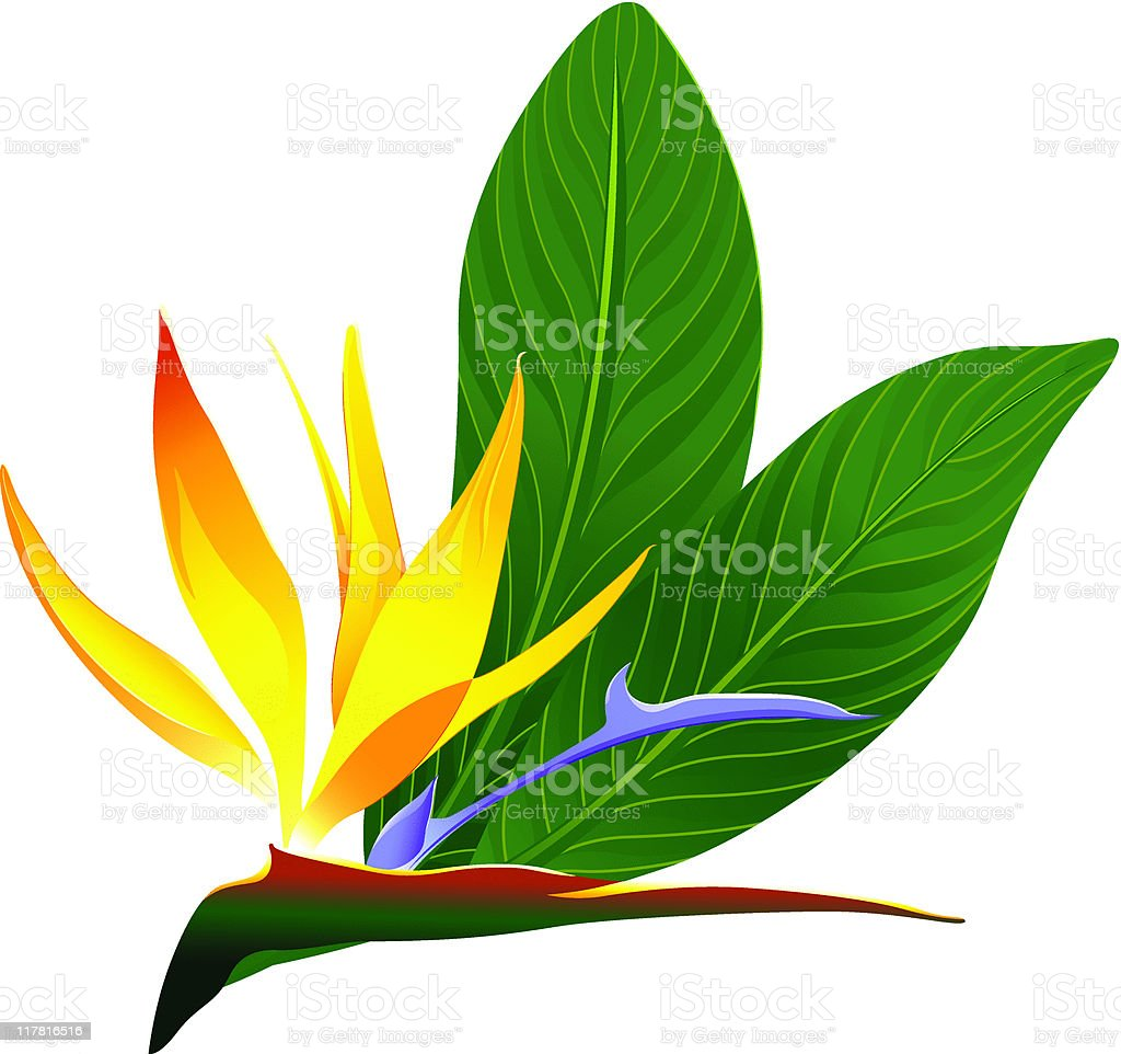 Artistic Color Rendering Of Bird Paradise Plant Royalty Free