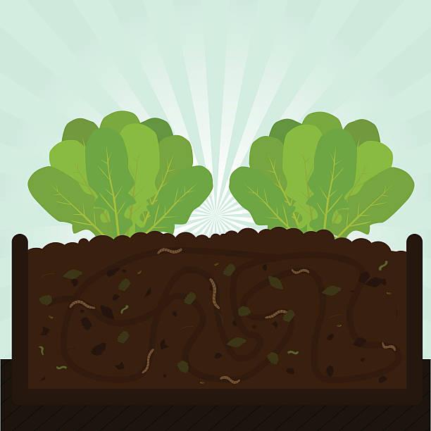 rucola baum und kompost - herbstgemüseanbau stock-grafiken, -clipart, -cartoons und -symbole