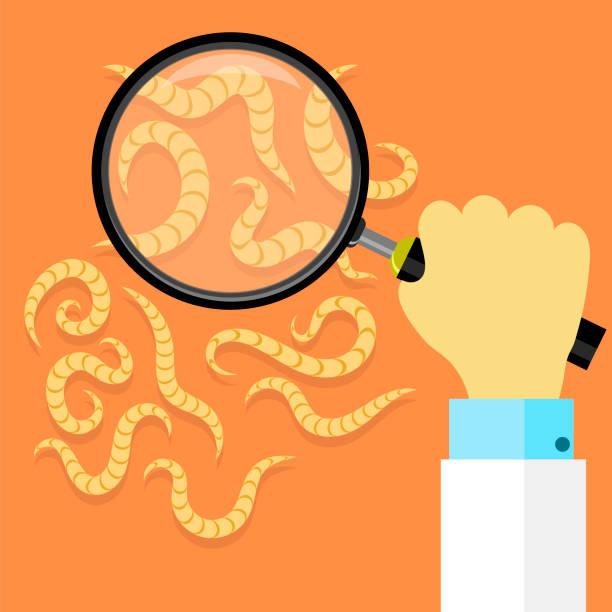Ascarid, Helminth, Pinworm Threadworm. Set of Parasite on Orange Background Ascarid, Helminth, Pinworm Threadworm. Set of Parasite on Orange Background parasitic stock illustrations