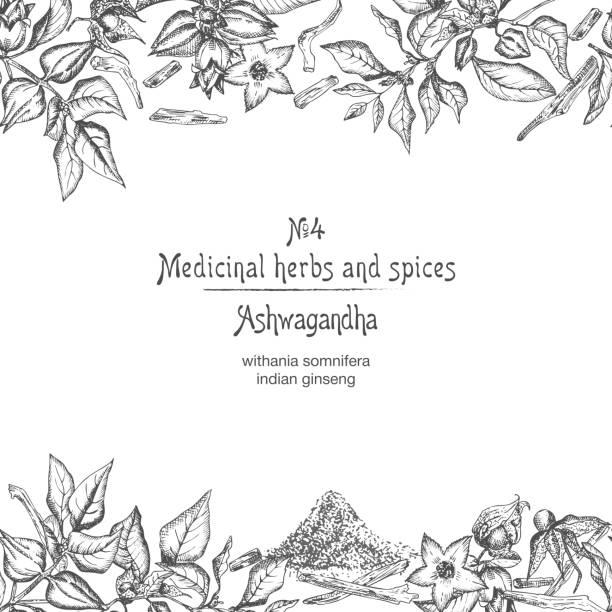 ashwagandha nahtloses randbild muster von hand mit beeren, leben und zweig in schwarzer farbe auf weißem hintergrund gezeichnet. retro-vintage-grafikdesign botanische skizzenzeichnung - schlafbeere stock-grafiken, -clipart, -cartoons und -symbole