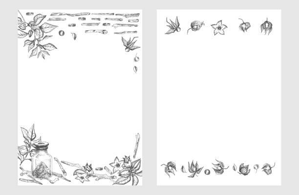 ashwagandha nahtlose rahmen rahmen muster handgezeichnet mit beeren, lebt und zweig in schwarzer farbe auf weißem hintergrund. retro vintage grafik-design botanische skizze zeichnung - schlafbeere stock-grafiken, -clipart, -cartoons und -symbole