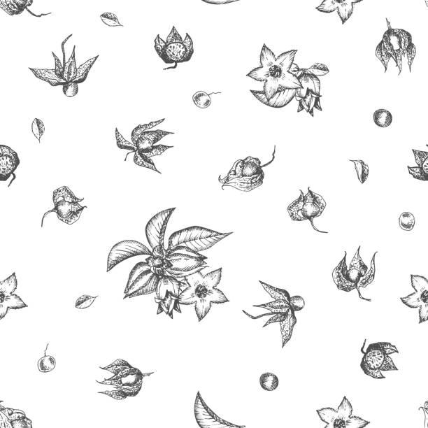 ashwagandha nahtloses muster von hand mit beeren gezeichnet, leben und zweig in schwarzer farbe auf weißem hintergrund. retro-vintage-grafikdesign botanische skizzenzeichnung - schlafbeere stock-grafiken, -clipart, -cartoons und -symbole