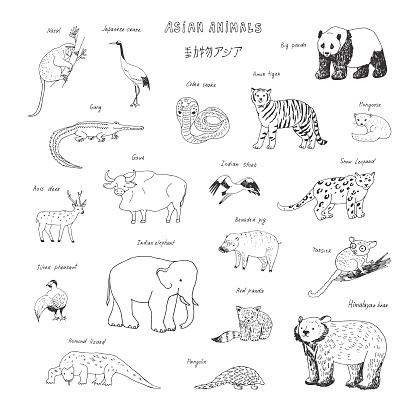 asian animals doodle graphic vector illustrations set