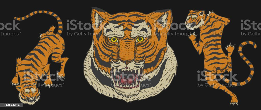 8bf9c14dc Asian tigers in vintage japanese style for symbol. Face Close up. Wild  animals cats