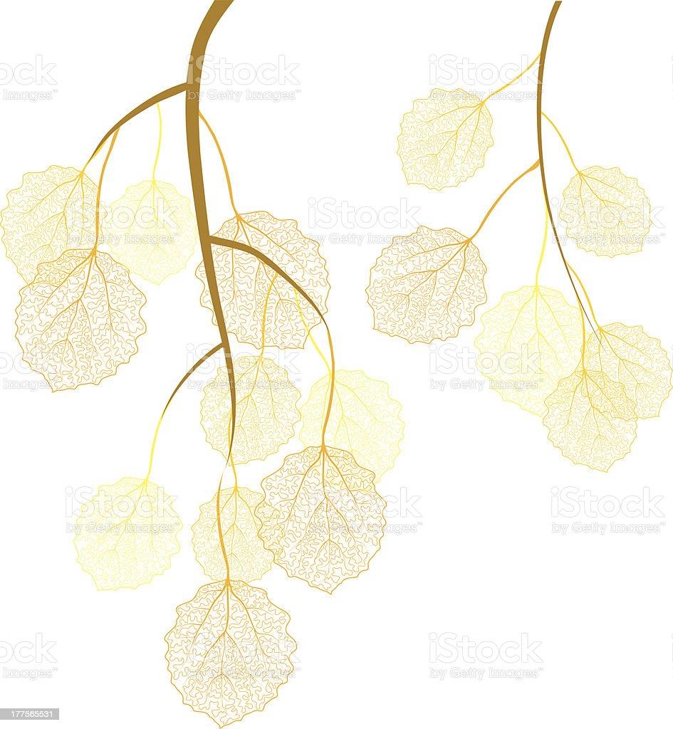 aspen autumn branches vector art illustration