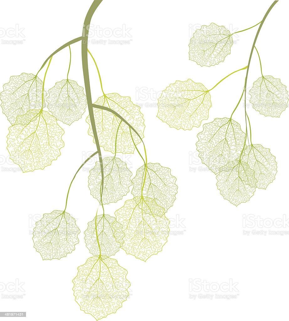 Aspen branches vector art illustration