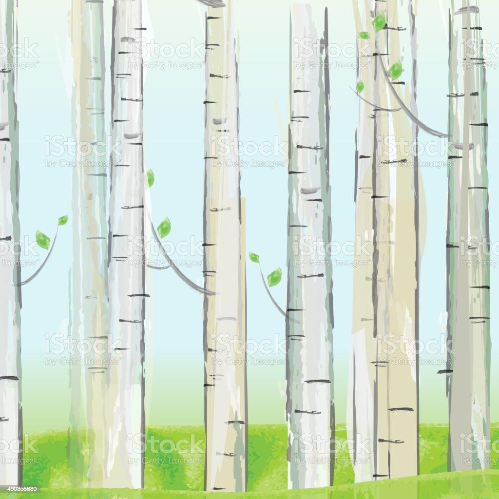 Aspen forest vector art illustration