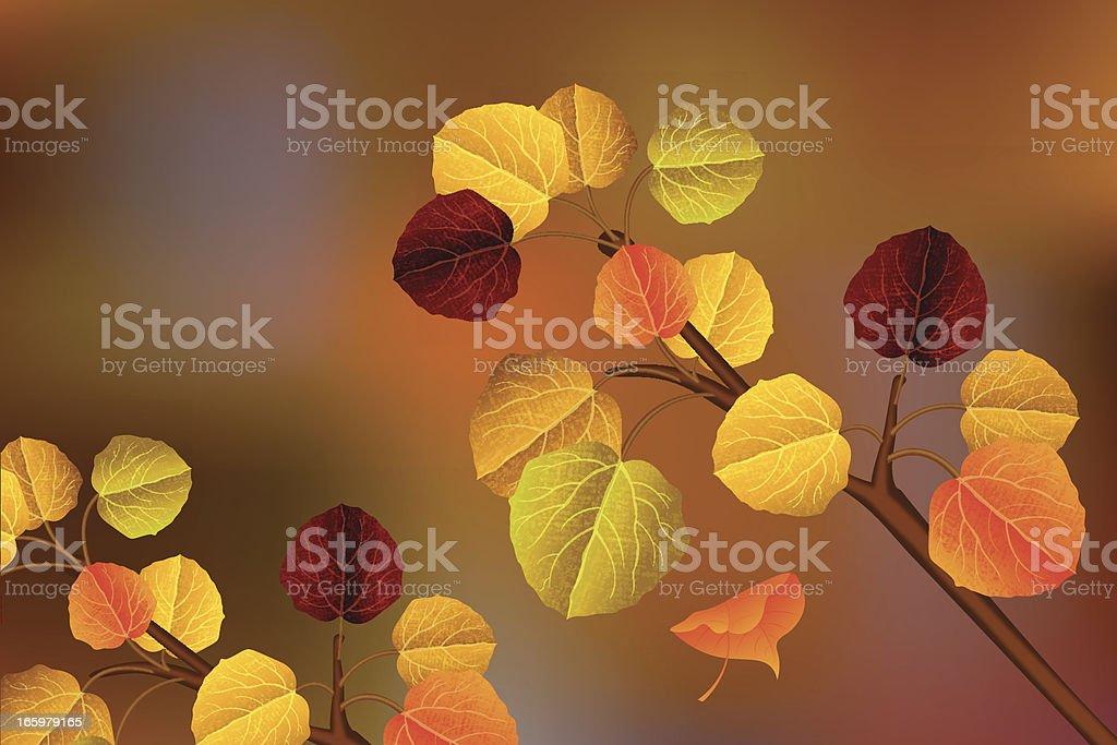 Aspen leaves vector art illustration