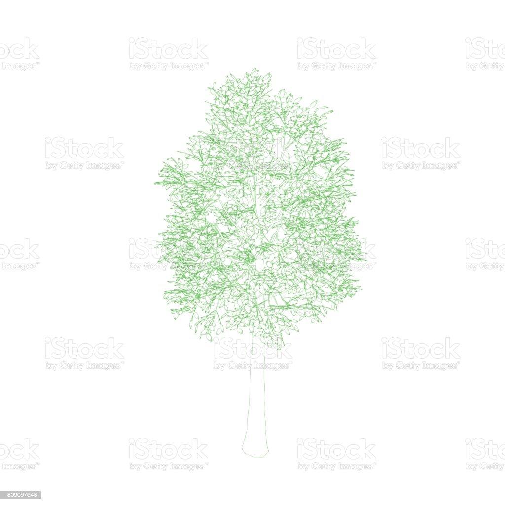 Aspen tree. Isolated on white background. Vector outline illustration. vector art illustration